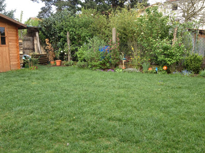 Lawn care in spring - the way to a dense lawn in spring.