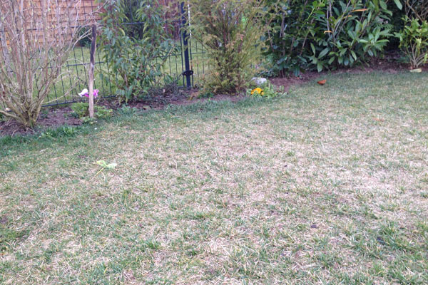 The typical matt and worn lawn in spring: lawn care is now urgently necessary.