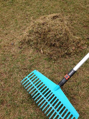 Break lawn after scarifying - important for lawn care in spring.