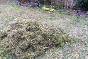 Grass and moss remains after scarifying